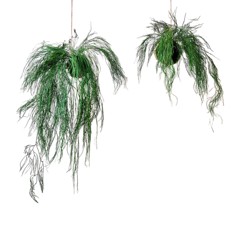 onderhoudsarme hangplanten